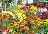Flowers autumn fall pot