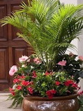PRETTY POT OF FLOWERS & PALMS BY FRONT DOOR