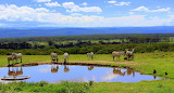 Water Hole ~ Lake Nakuru