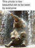 Happy baby elephant showering