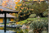 Autumn Koi Pond Golden Door