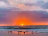 Birds at Beach Sunrise