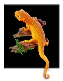 "Science scientificillustration ""Red Eft"""