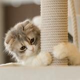 ☺ Cute kitty...
