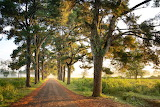 Photo-of-dirt-road-surrounded-by-trees-2582621