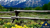 Grand Tetons Balsams and Buckingrails in Wyoming by Lori Morriss