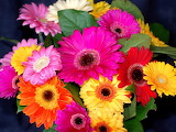 gerbera flower bouquet bright colorful