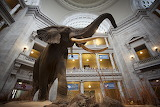 Museums - Natural History Museum - DC