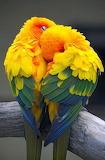 2 Parrots