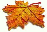 ^ Autumn quilled maple leaf