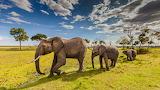 Elefanst - Elephants
