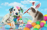 Easter, painted dog, cat, animals, eggs, colors, colorful