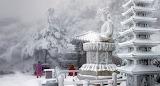 Gangwon Snow