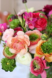 flowers pione 8