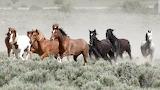 Wild Horses (3)