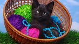 Kitten in a Basket with Yarn