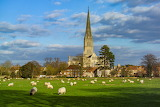 Salisbury Cathederal and flock