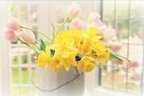 Giunchiglie e tulipani 5