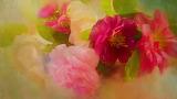 Flowers, green, bright, roses, bouquet, petals, art, briar, pink