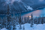 Forests Canada Peyto Lake Fir Trees Banff 523105 1280x853
