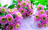 Beautiful-pink-flowers