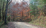 Fall Colors in the Big South Fork