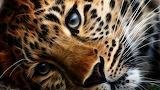 Lonesome leopard