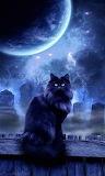 Black Cat & Moon