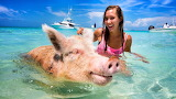 Swimmer pig and beautiful girl