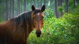 Wild Horses (4)