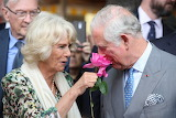 A Rose from Camilla