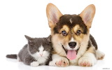 Dog and cat3