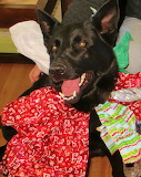 Nike Plays Dress Up with Christmas Wrap- She Puts Up with It...