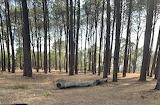 Trees at Camp Spot on WA road trip