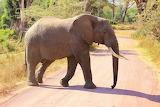 Big Tusker ~ Tanzania