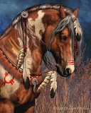 Indian horse by werewolves0791