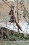 Animals tumblr mohnblumesworld Fox