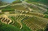 Longji-Rice-fields-PinganChina
