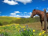 Horse, landscape, flowers, mountains, nature, hills, field, beau