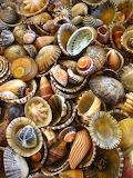 Tumble of shells