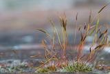 Day2-Strangegrasses