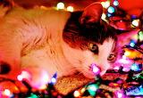 Kitty Christmas Lights
