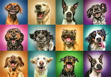 Funny dog collage