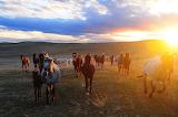 Wild Horses (5)