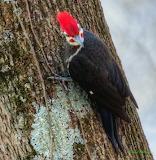 IMG_0113 Woodpecker