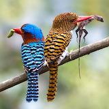 Kingfishers...