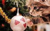 #Kitty's Christmas