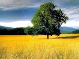 Summer Prairie 1