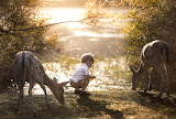 A Little Boy And Fallow Deer