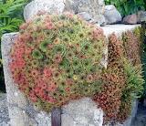 26921fd7cf4059f4431c9638b4ab7e16--succulent-gardening-succulent-